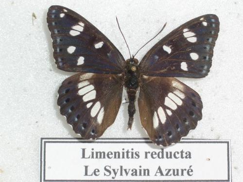Sylvain Azuré