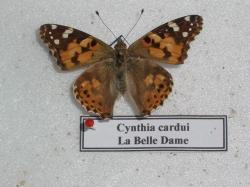 Belle Dame 2