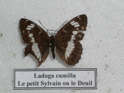 Petit Sylvain