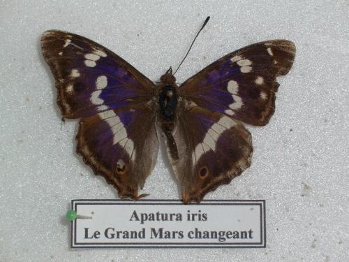 Grand Mars changeant M