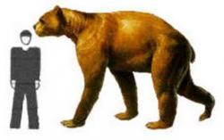 Cryptozoologie cryptozoology irkuiem ours géant kamtchatka arctodus simus inconnu