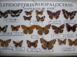 Boîte de Nymphalidae 2 présente à l'expo 2010