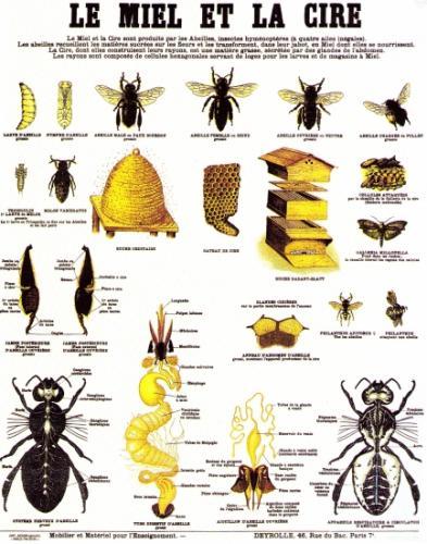 Les abeilles cont aux enfants for Abeilles dans la maison