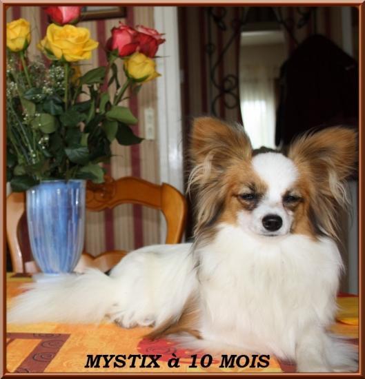 Mystix à 10 mois