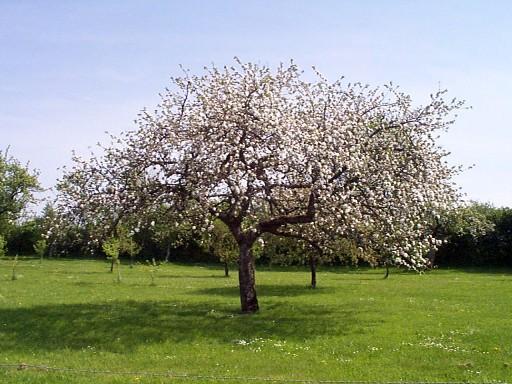 Riz, pommier, vigne: les plantes ont des ancêtres communs