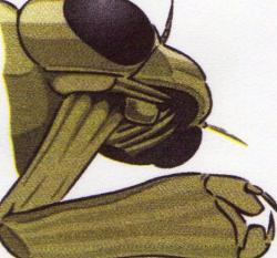 Masque de larve de Libellule