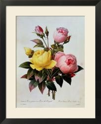 rosa lutea et indica