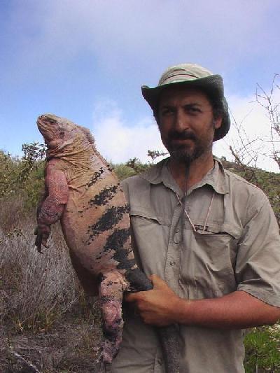 volcan wolf galapagos Gabrielle Gentile Howard Snell zoologie découverte 2009 Conolophus Marthae nouvelle espèce iguane rose et noir
