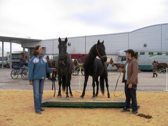 Salon quisud montpellier 2009 - Salon du cheval montpellier ...