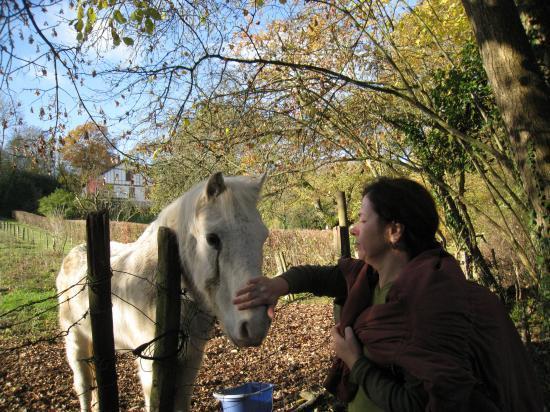 Paula et le cheval