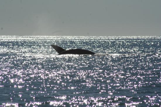 Les Baleines, là!!!!