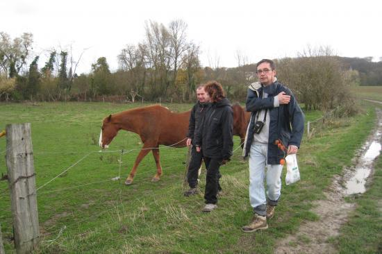Caresse au cheval