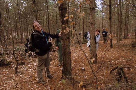 Résineux dans la forêt de Montmorency
