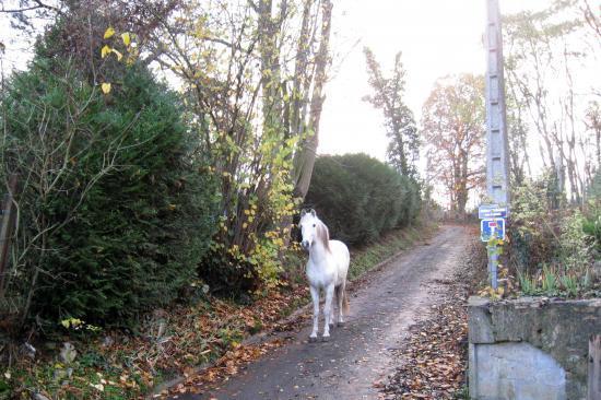 Cheval errant dans le chemin du Trou Monsieur et des Saussayes