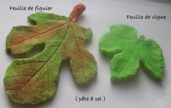 feuilles vigne , figuier