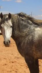 Le cheval de la région