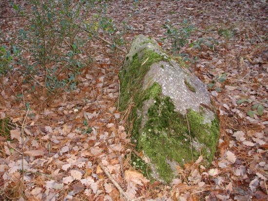menhit bois du Buisson
