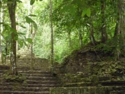 Palenque - ruinas en la selva