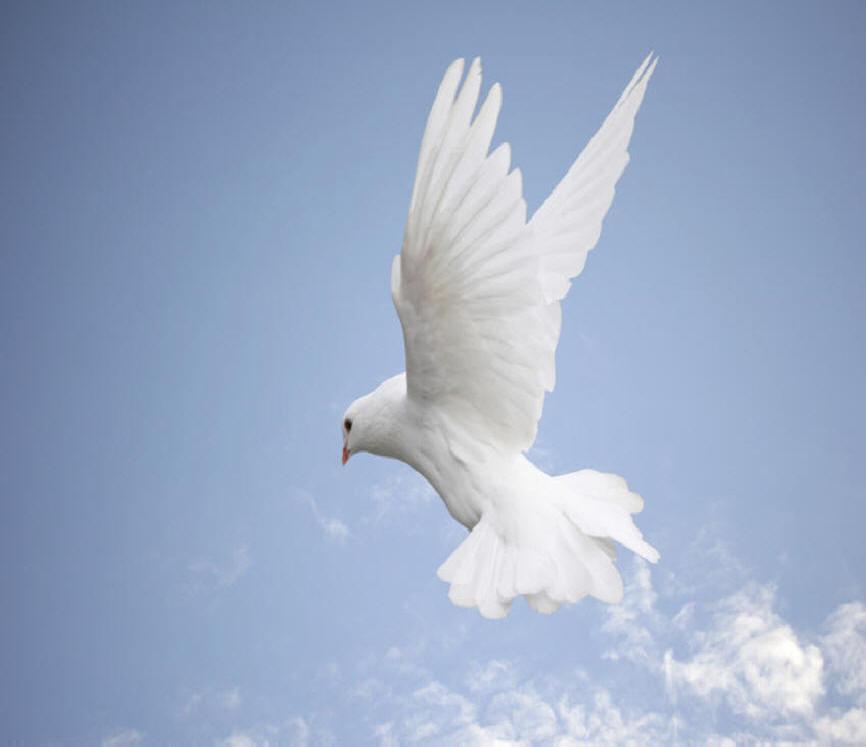 Colombes de paix le jardin de caro - Le petit jardin wittenberge colombes ...