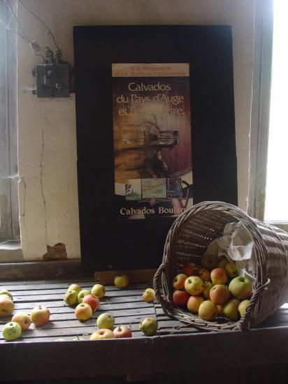 L'Arrivage des Pommes déversées sur la table, elles sont prêtes pour le triage