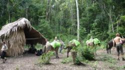 El Mirador - primera noche al campamiento de los chicleros
