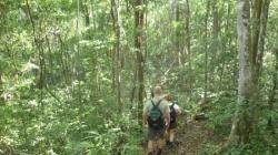 El Mirador - Caminando en la jungla