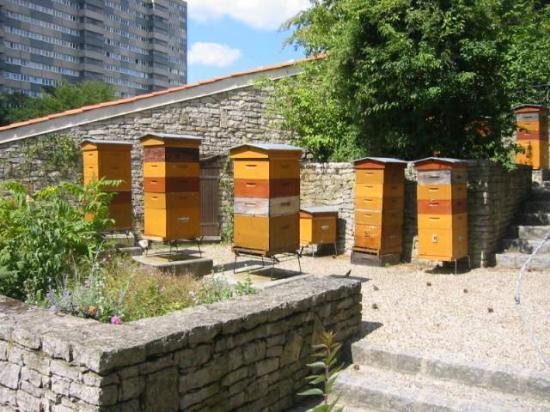 le rucher du parc Georges Brassens, exemple de l'implantation d'abeilles en ville