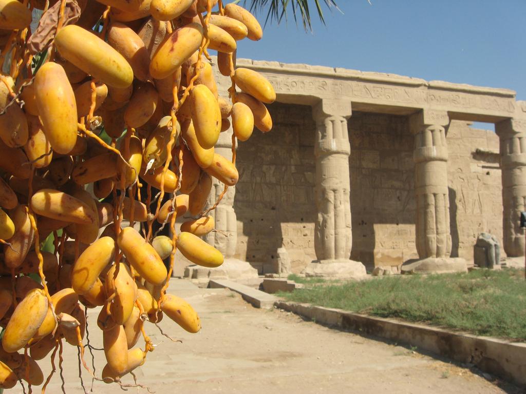 Portique du temple de Séthi 1er - Août 2009