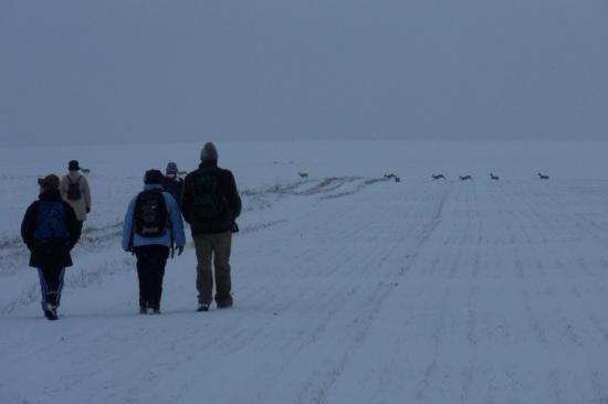 Chevreuils traversant devant les randonneurs