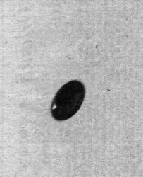 27 Mars1973 Génova Sestri, Italia