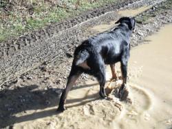 j'aime bien la boue