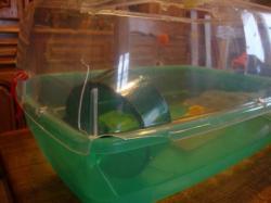 Cages en plexi pour Hamsters ou Souris + Cage Aquarium + Accessoires DSC01910