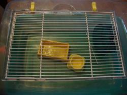 Cages en plexi pour Hamsters ou Souris + Cage Aquarium + Accessoires DSC01912