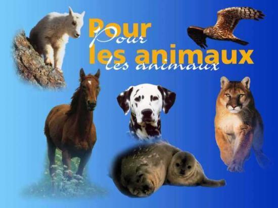 SPAED (Société de Protection des Animaux en Danger)