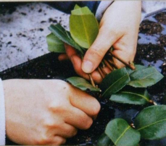 Jardinage en janvier Jardinage en janvier