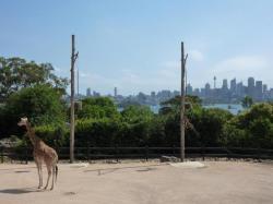 Vue imprenable sur la city depuis le Taronga zoo