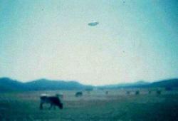 1981 Argentine