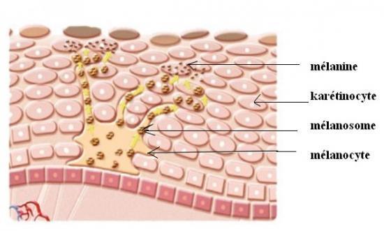 Conseil dermatologie Peau tachée et troubles de la pigmentation (visage,