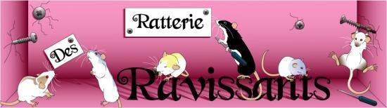Vos mélanges pour ratoux Baniere-RVS