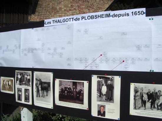 Arbre généalogique des Thalgott de Plobsheim