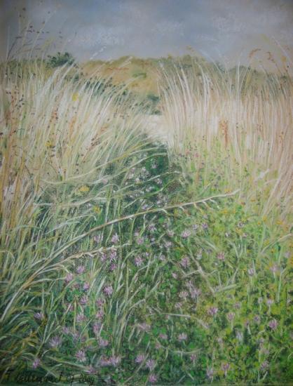 Passage entre les herbes folles de la prairie.
