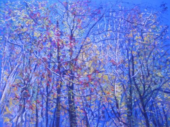 Cimes des arbres en automne.