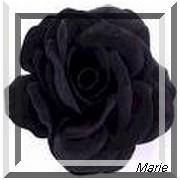 Langage Des Roses