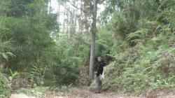 Chirripo - en el bosque