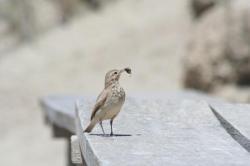 petit oiseau espérant désespérement de pouvoir passer à son nid