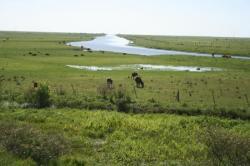 les marais, avec vaches carpinchos et échassiers de toutes sortes
