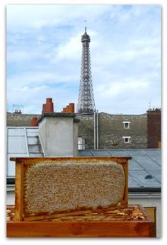 Une belle image ou l'on aperçoit une abeille qui vole dans la ville de Paris