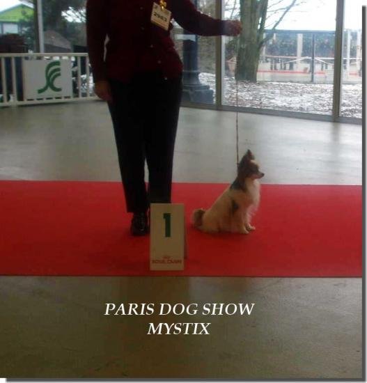 Paris Dog SHOW 2010
