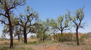 Paysage du bush