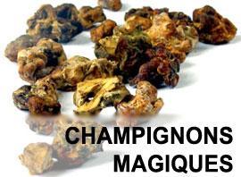 champignons magiques. Black Bedroom Furniture Sets. Home Design Ideas